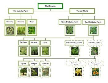 montessori plant kingdom chart chart montessori and plants. Black Bedroom Furniture Sets. Home Design Ideas
