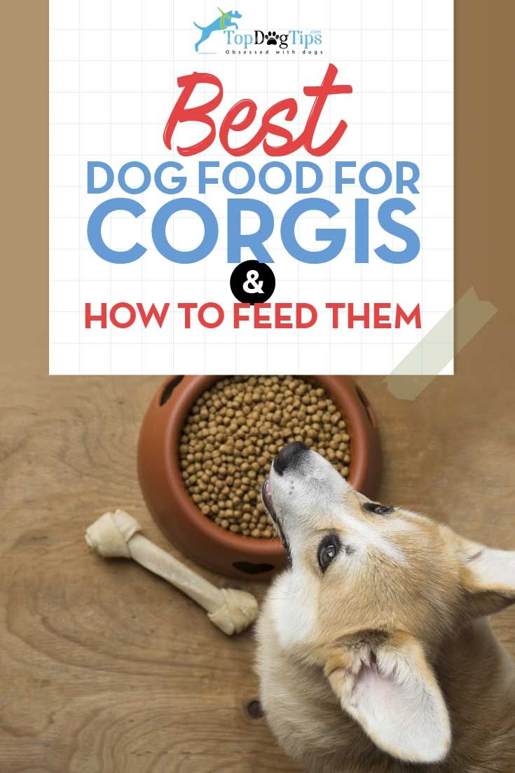 Best Dog Food Brands For Diabetic Dogs 5 Recommended Dog Foods For Diabetic Dogs Wellness Core Nat Pedigree Dog Food Dog Food Recipes Roast Chicken And Rice