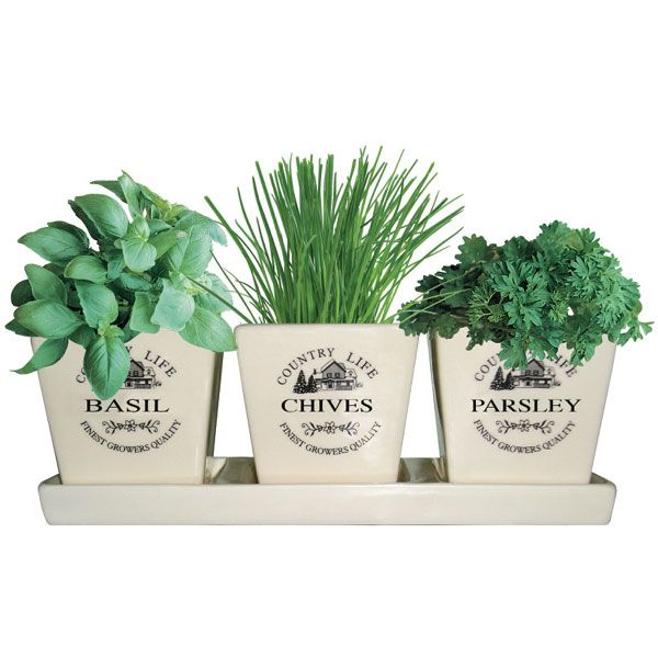 Windowsill Herb Pots On Sale | Fast Delivery | Greenfingers.com