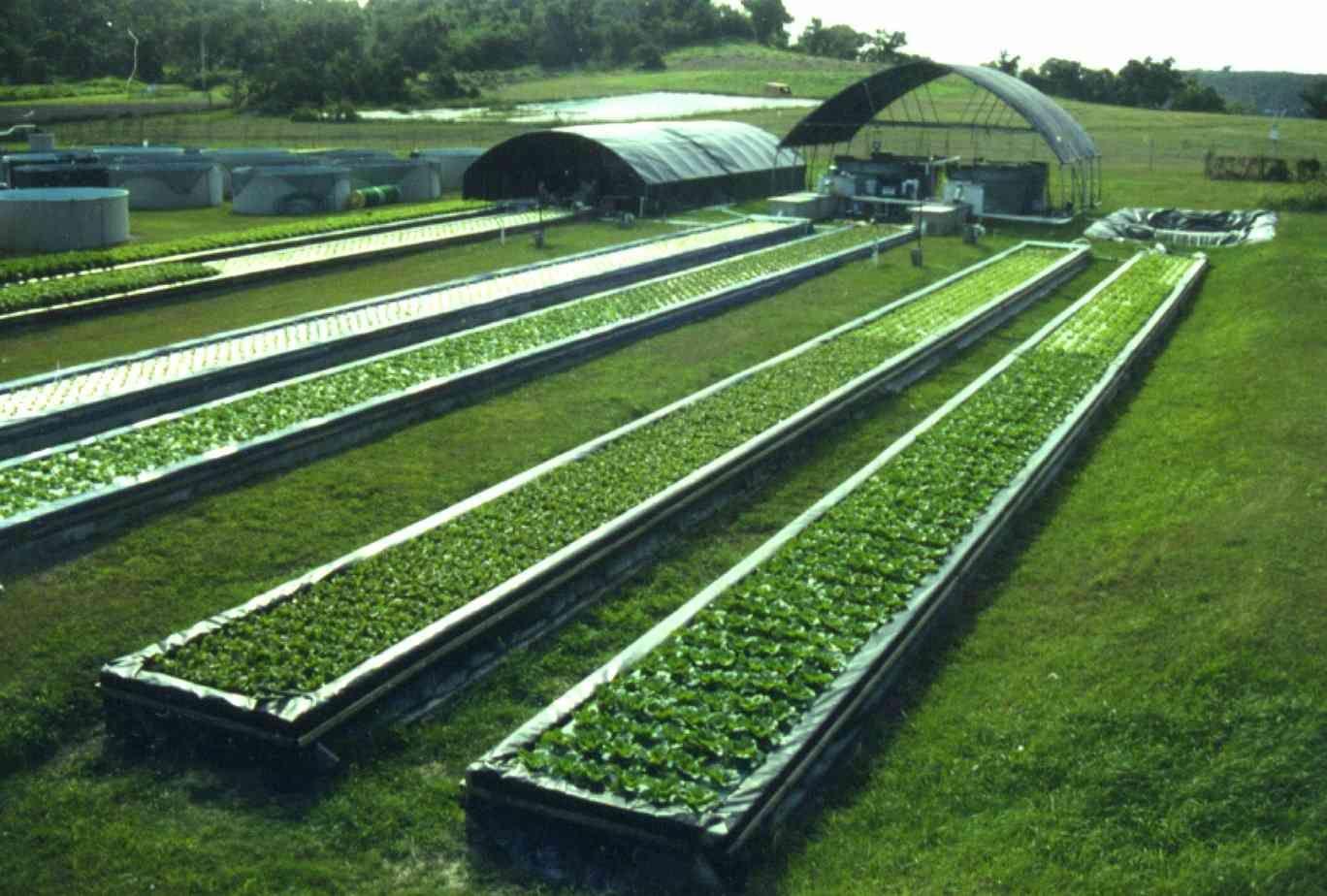Aquaponics farm business plan