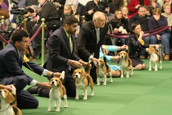 Meet The Handlers: The Humans on the Other End of the Leads