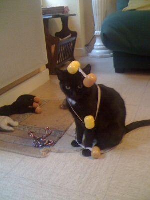 jouet chat fait maison