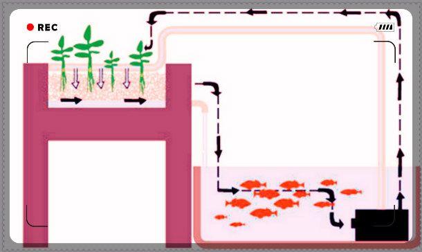 Aquapon Ics Diagram Aquaponics Design Aquaponics Design