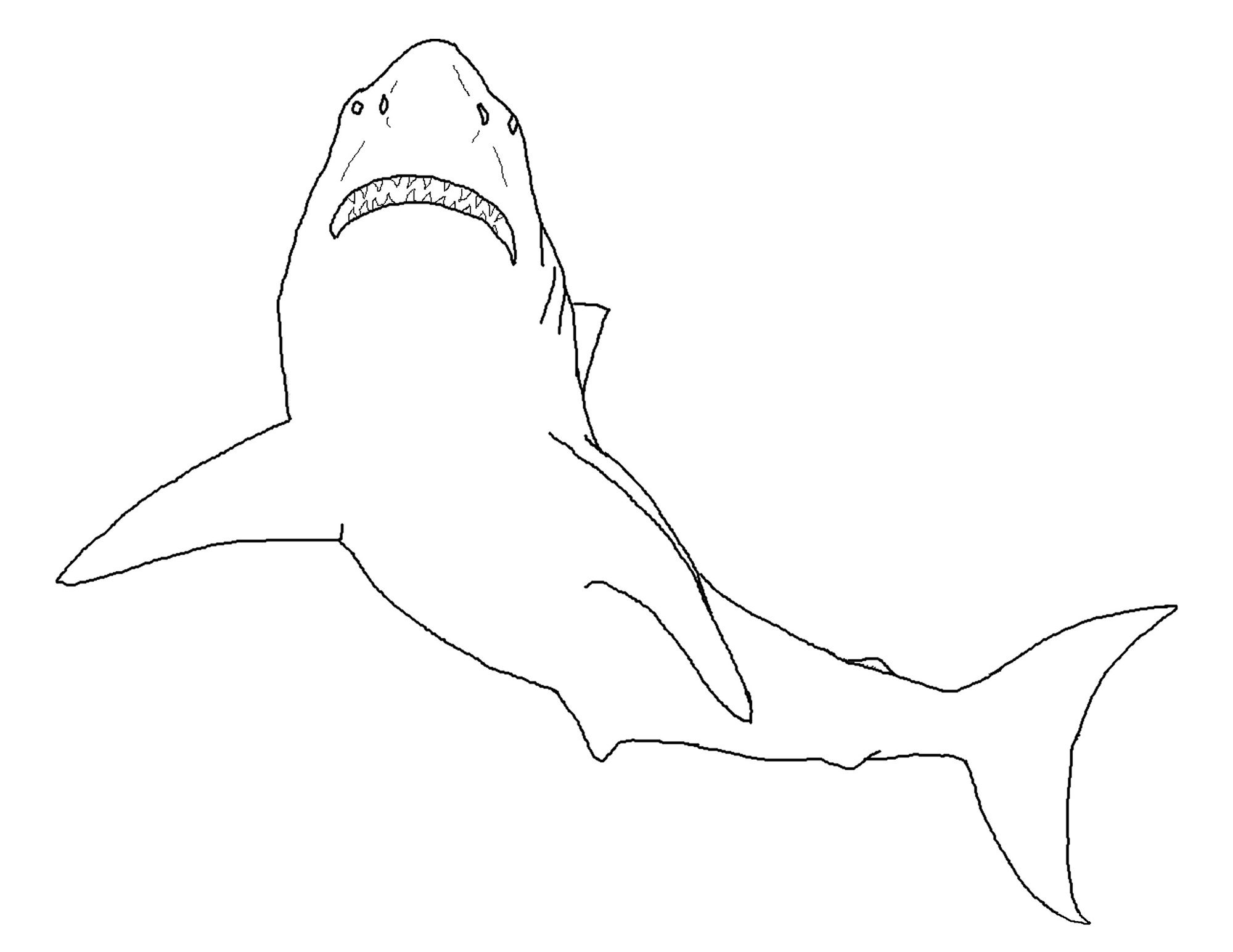 Shark Sheets For Kids | Activity Shelter | Shark Coloring Pages ...