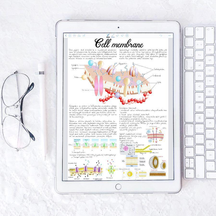 ✰ pin   bellaxlovee ✰   Study Notes   Study notes, Study