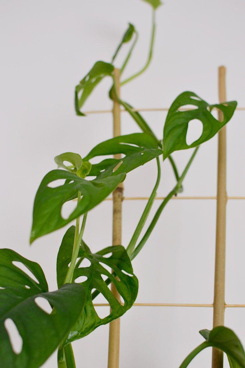 Rosliny Doniczkowe Zwisajace Pnace Rosliny W Moim Domu Plants Plant Leaves Leaves