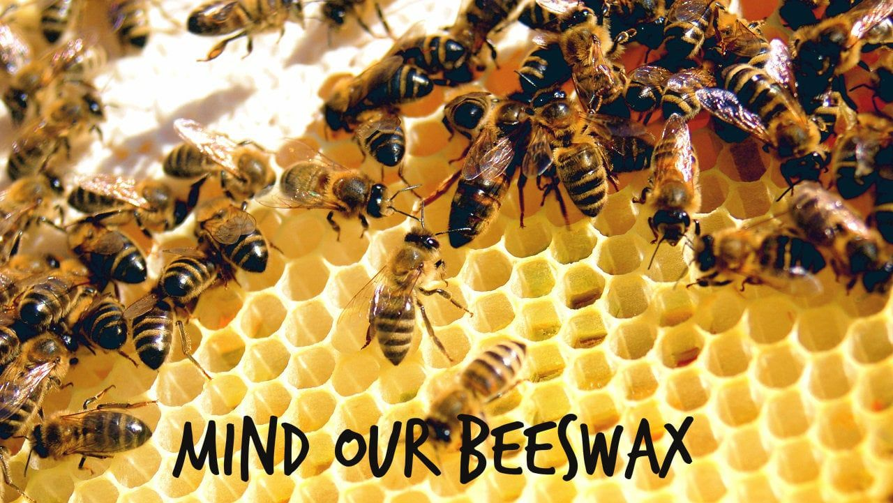 Wi-Hive – Beehive Monitoring System | NewsWatch Review