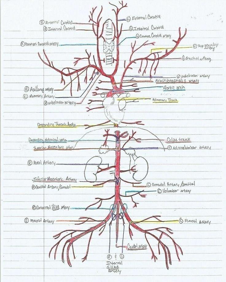 Großartig Tier Anatomie Und Physiologie Fotos - Menschliche Anatomie ...