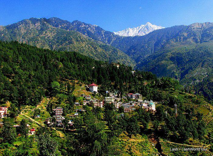 Tibet Culture in Dharamsala