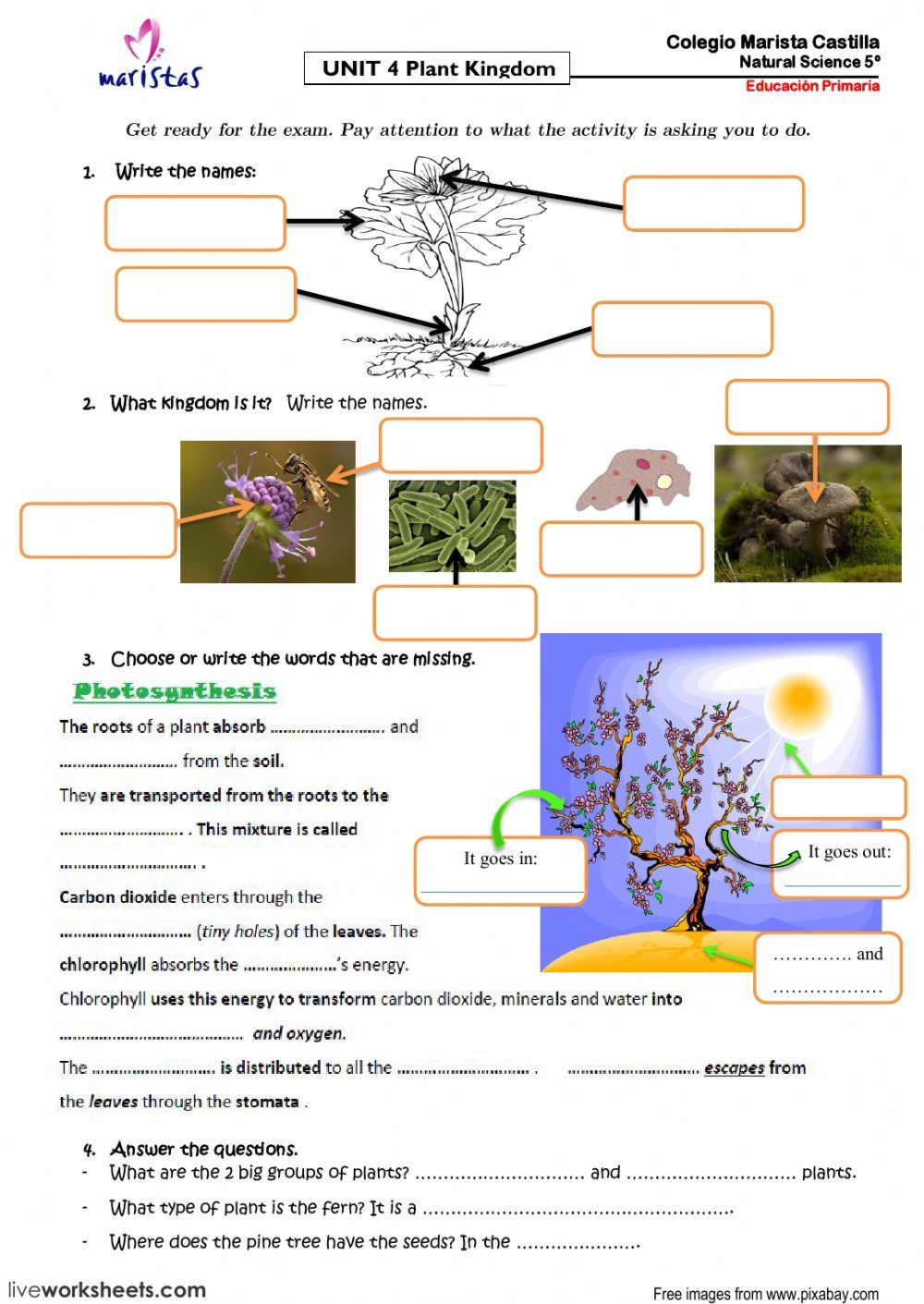 Plant Kingdom - Interactive worksheet   Science and nature [ 1411 x 1000 Pixel ]