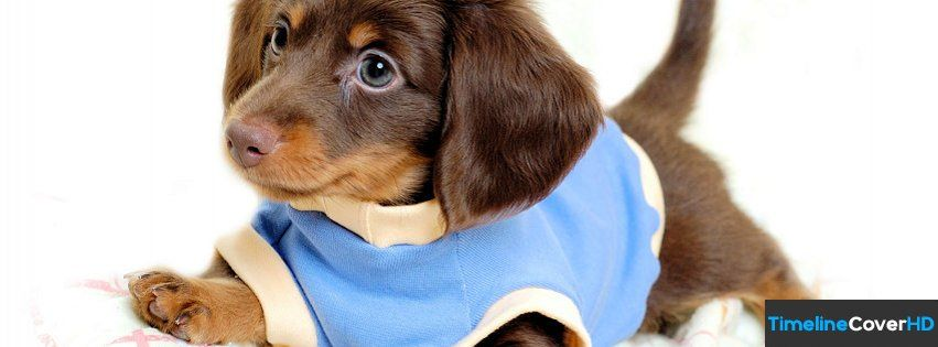 Dachshund Facebook Timeline Cover Hd Facebook Covers Timeline