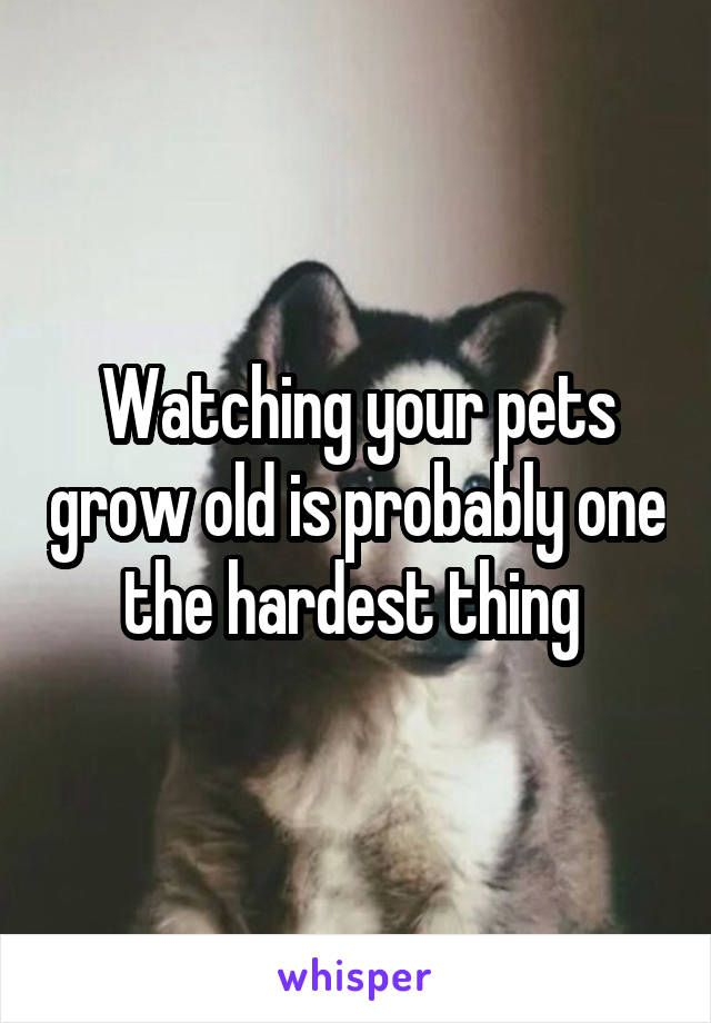 Watching your pets grow old is probably one the hardest thing