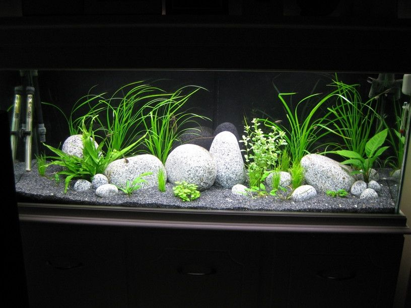 6 foot x 2 foot x 30 fish tank aquarium member 39 s for Fish tank pebbles