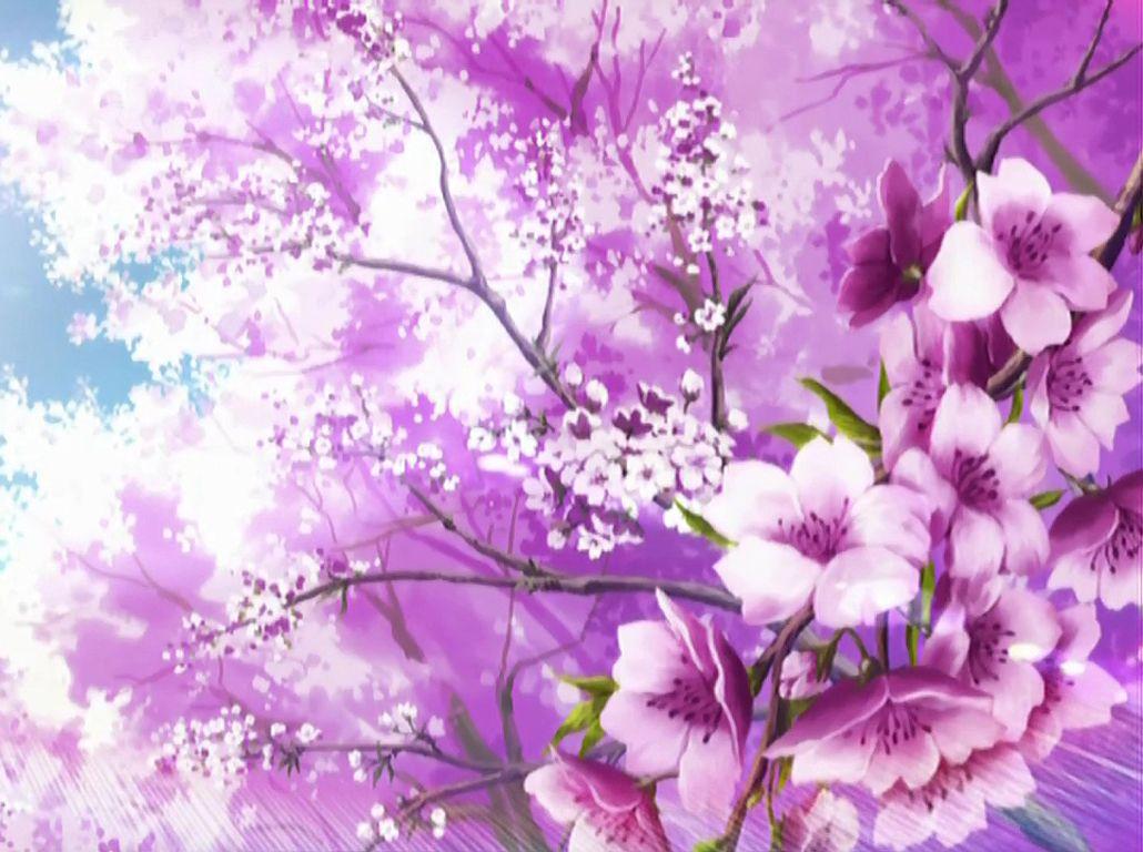 Sakura Blossoms Wallpaper Hello Spring Wallpaper Sakura Cherry Blossom Spring Wallpaper
