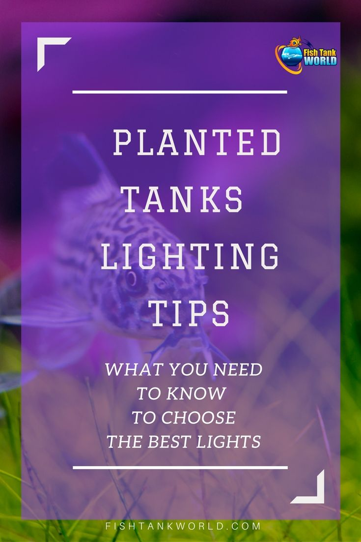 Lighting aquarium is aesthetic and necessity if you have live plants in your fish tank. Led lights for planted tanks are a good choice but there are ...  sc 1 st  Pinterest & Best LED Light for Planted Tanks in 2018 | Fish tanks Aquariums and ...