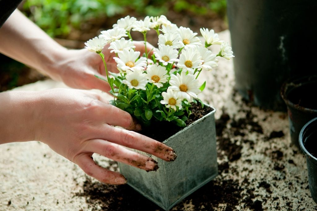 tips les fleurs planter en automne jardin pinterest les fleurs automne et fleur. Black Bedroom Furniture Sets. Home Design Ideas