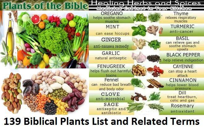 139 Biblical Plants List And Related Bible Food Bible Garden Biblical Garden