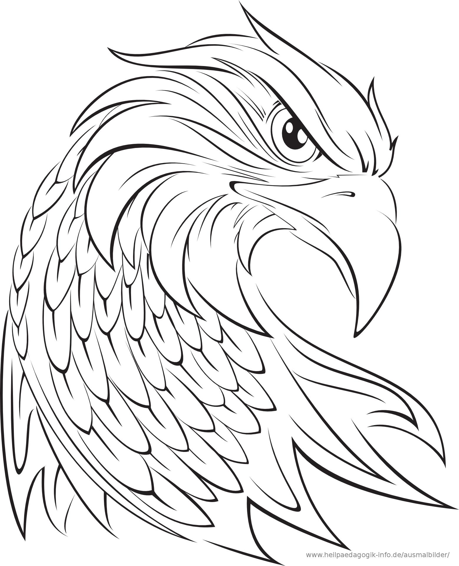 Malvorlage Adler