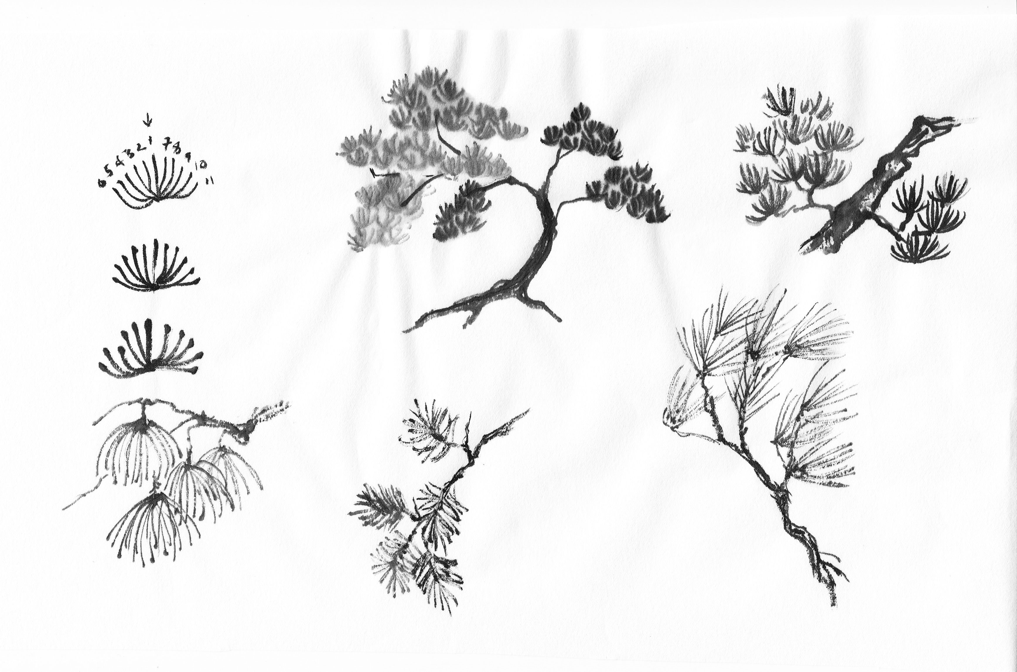 Specific Trees Painting Pine