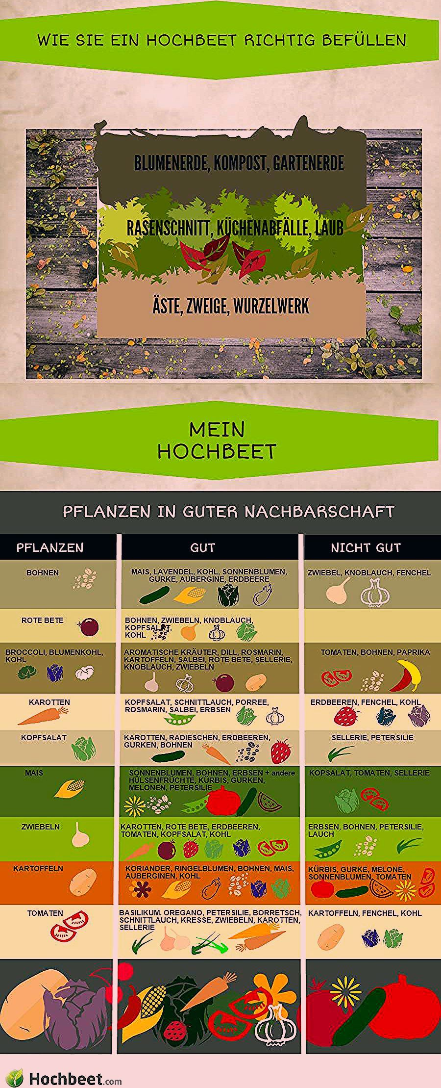 Photo of Mischkultur im Hochbeet | Hochbeet.com