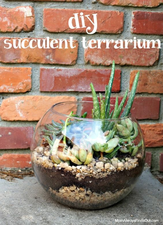 Succulent Terrarium In A Clear Glass Bubble Bowl Crafts And Diy
