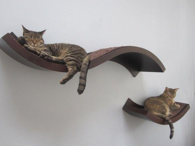 Cat Wall Shelves Diy 새끼 고양이 고양이 새끼