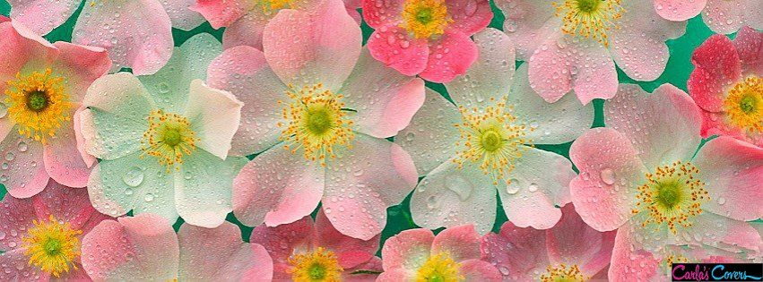 Pretty Flowers Facebook Covers