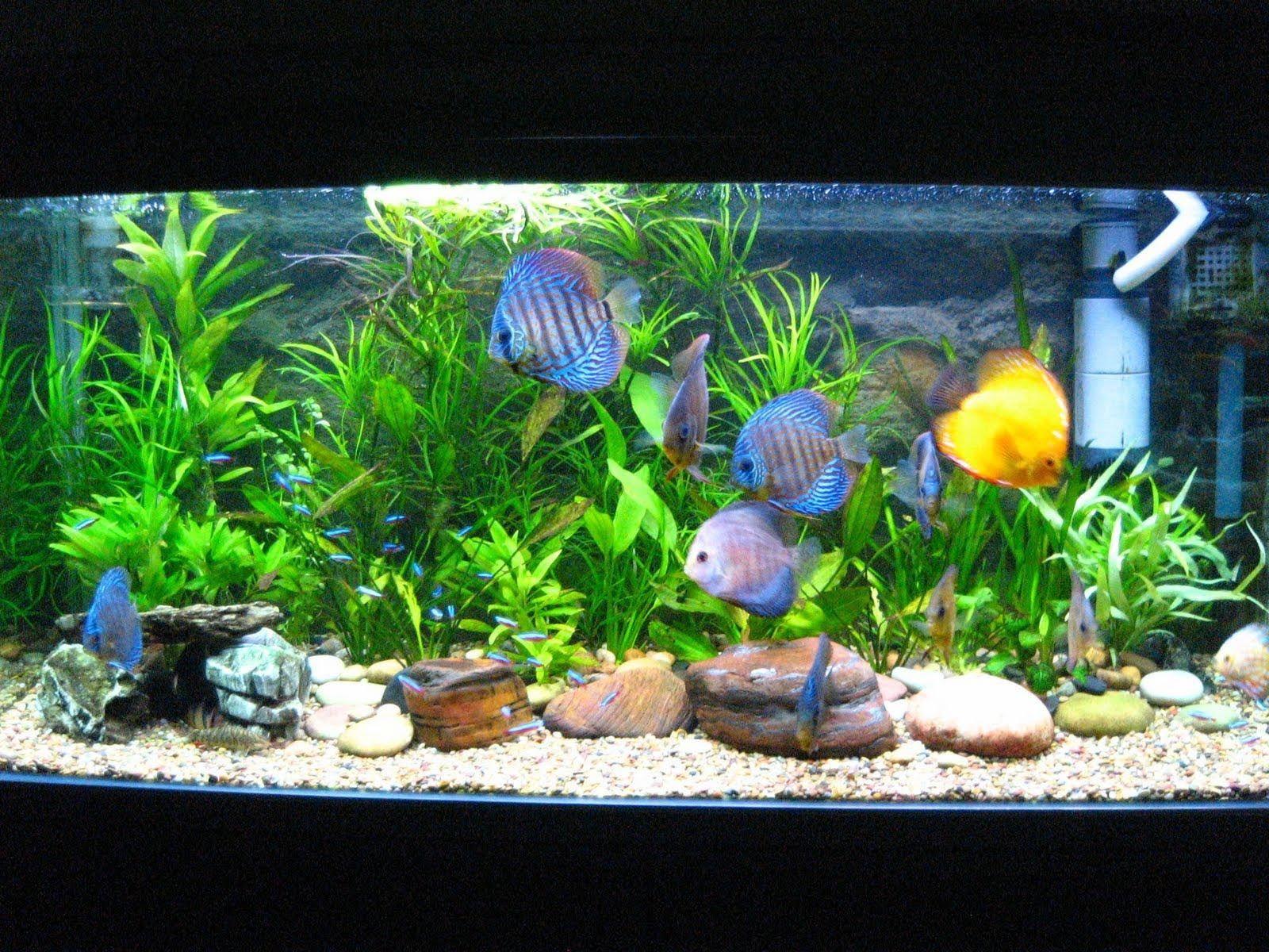 Captivating Cool Aquarium Fish Freshwater