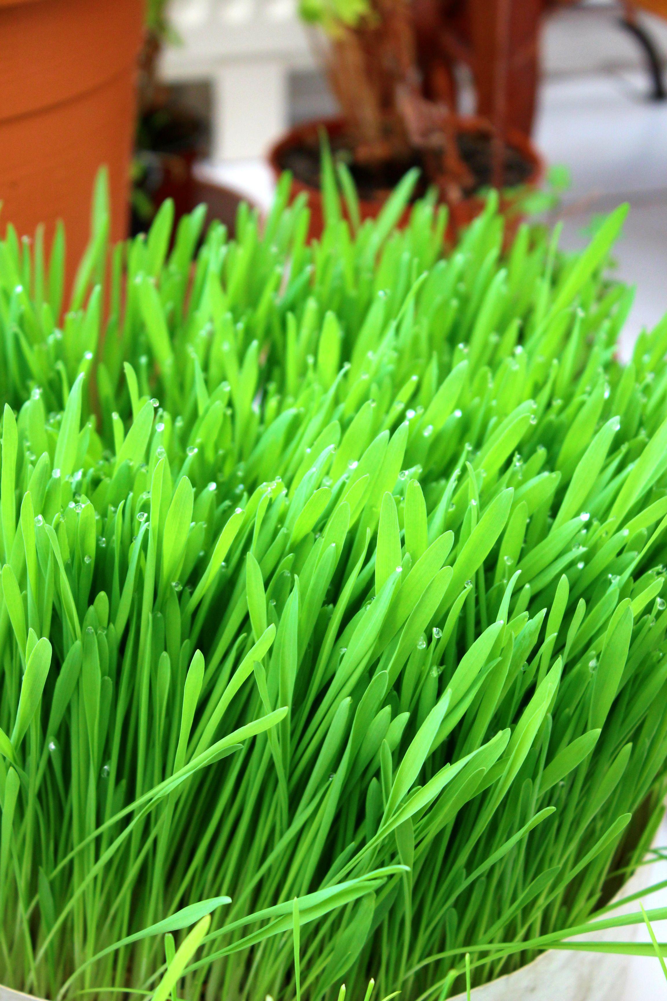 Les incroyables vertus de la chlorophylle | Salade de
