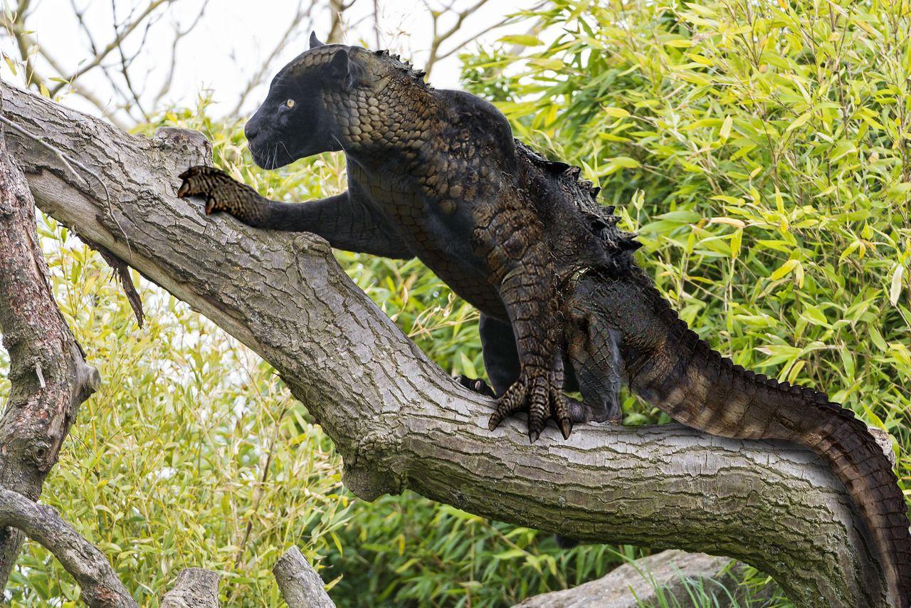 Miguel Bravo Allipanther Hybrid Animal Weird Photoshopped