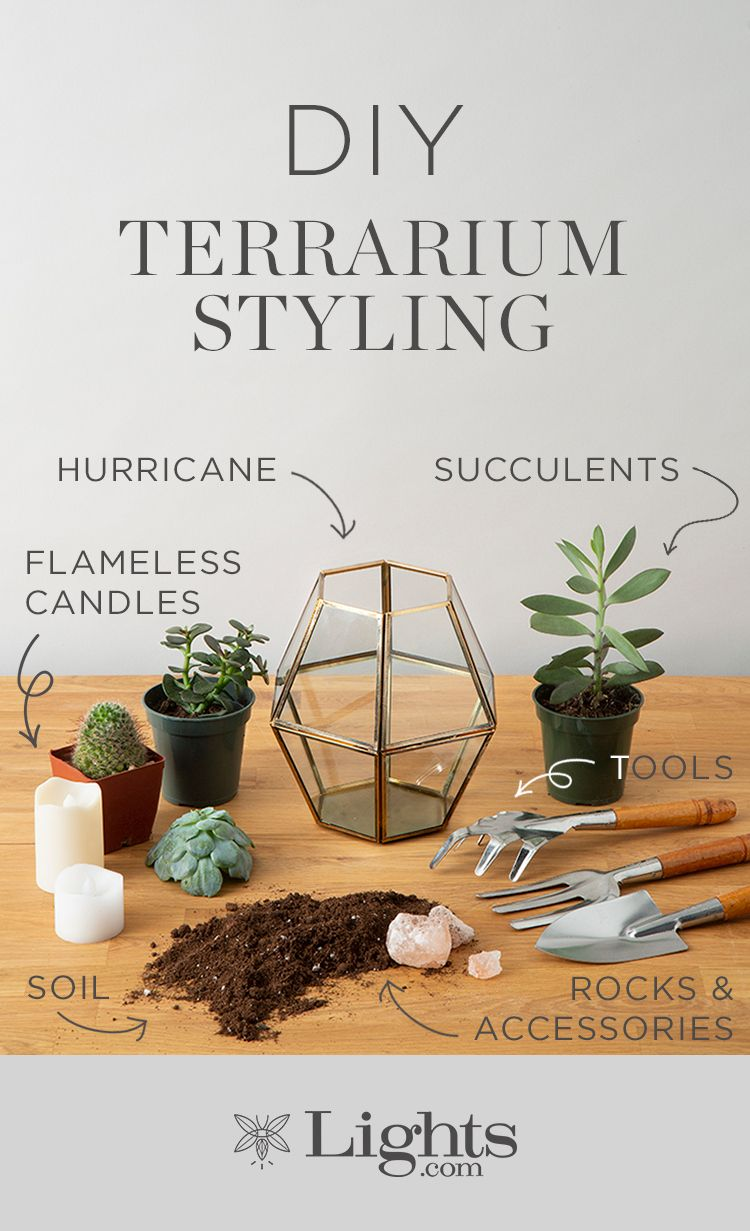 Diy terrariums plant life pinterest terraria and diy terrarium