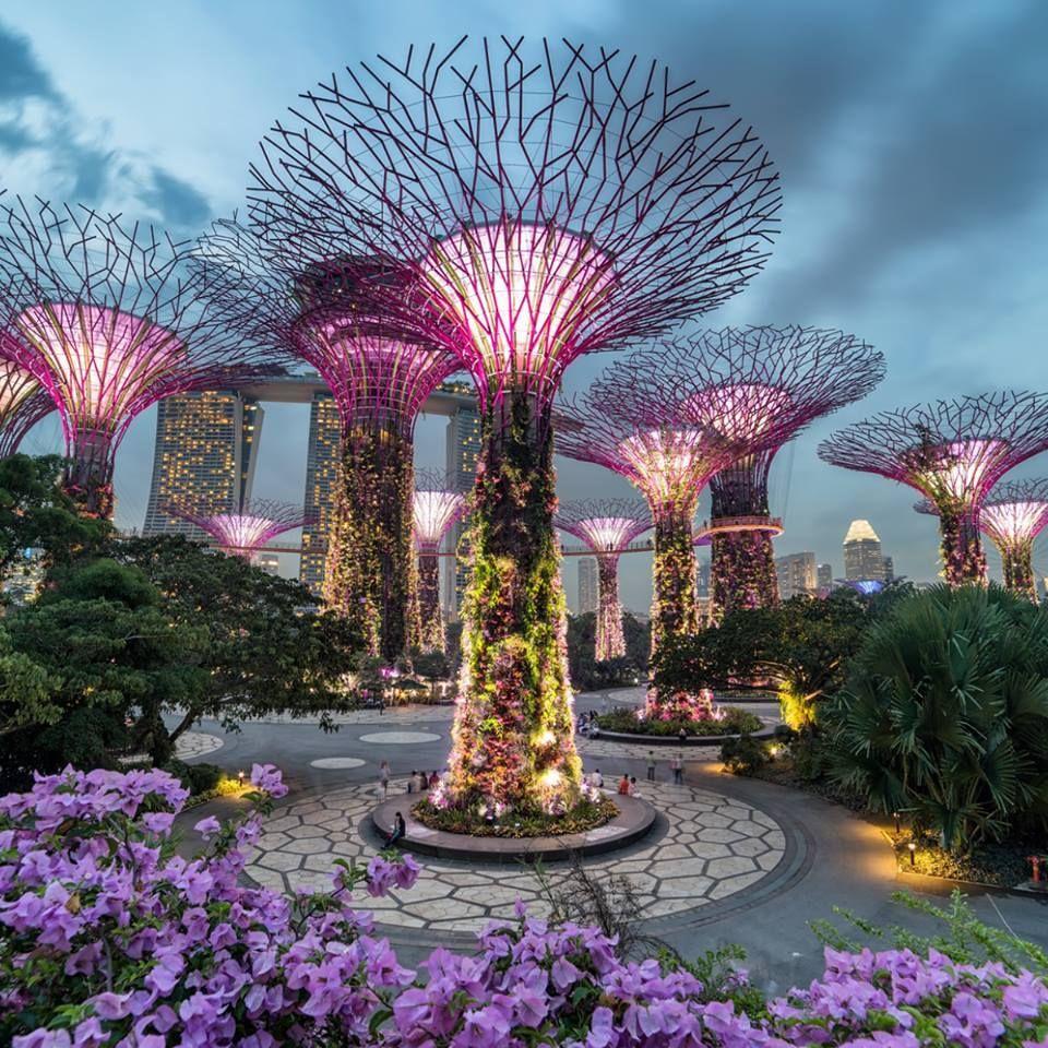 d33a04a13e4b2ac244cc0d78feca89db - Hotels In Gardens By The Bay