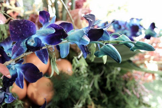 Dendrobium Orchid Blue Orchids Flower Quotes Orchids