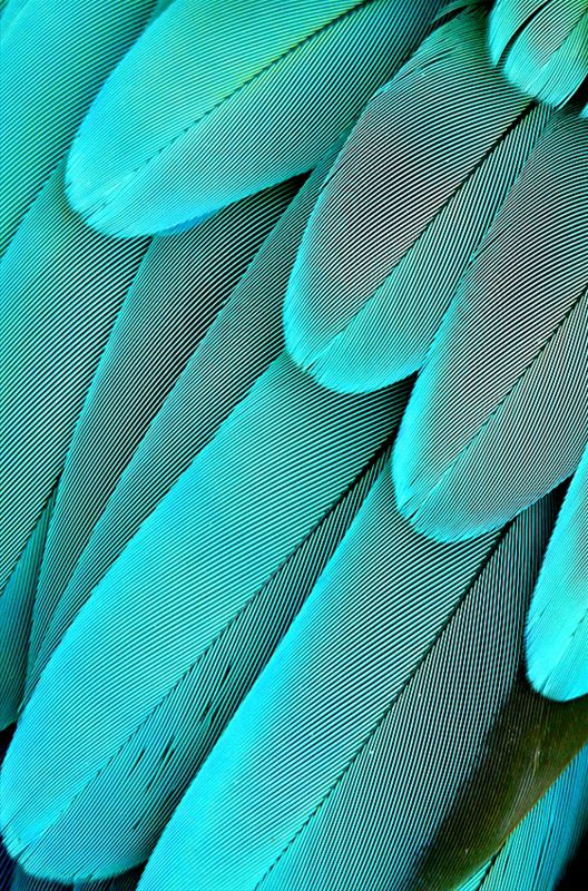 Feathers |Patterns in Nature| |Patterns| |Nature| #patterns #nature  https://biopop.com/