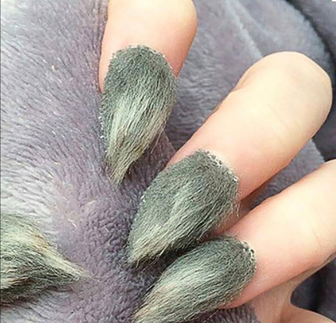 Furry Nails Art | Furry nails and Nail trends