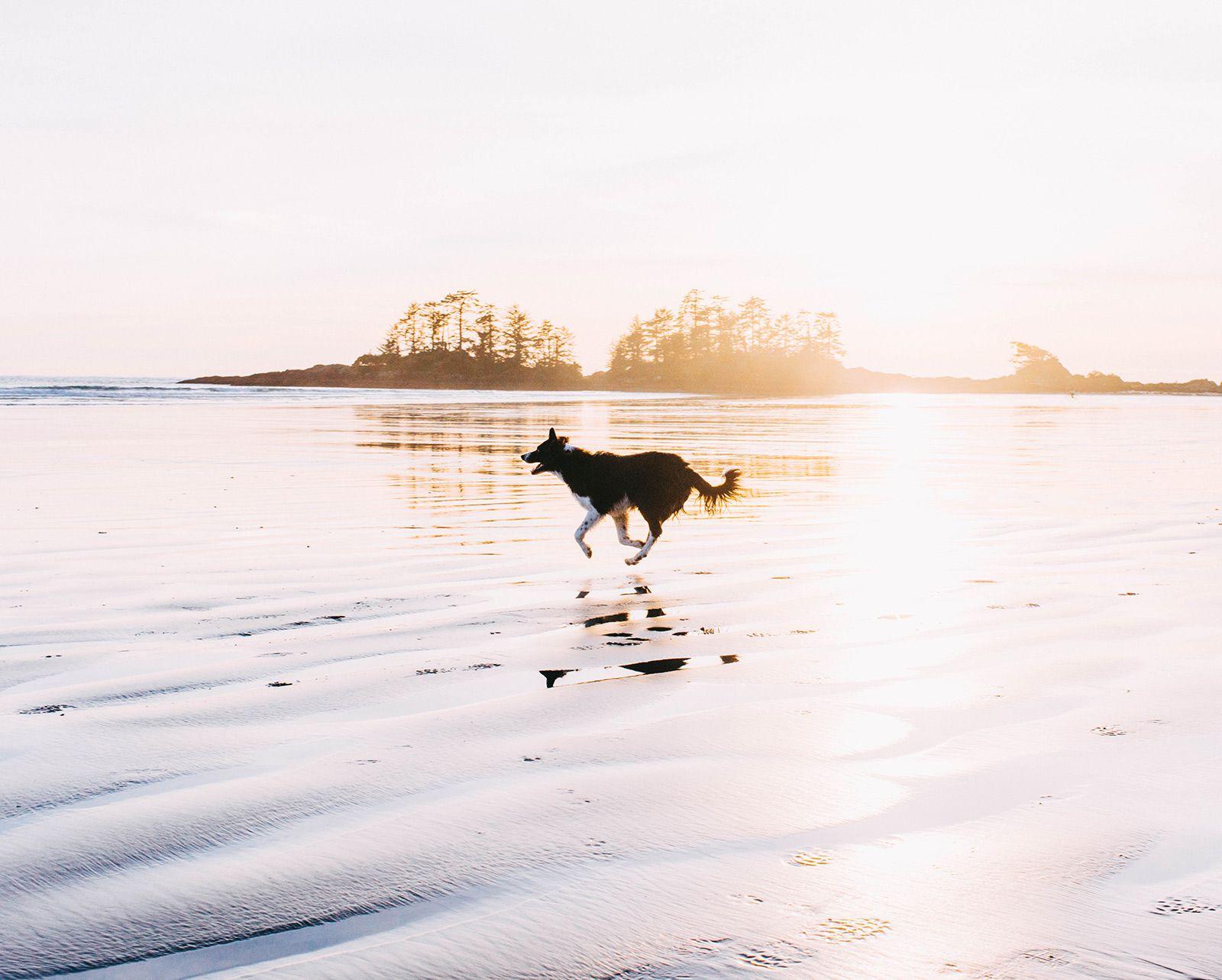 Andrew Knapp Instagram Dogs, Dog person, Border collie