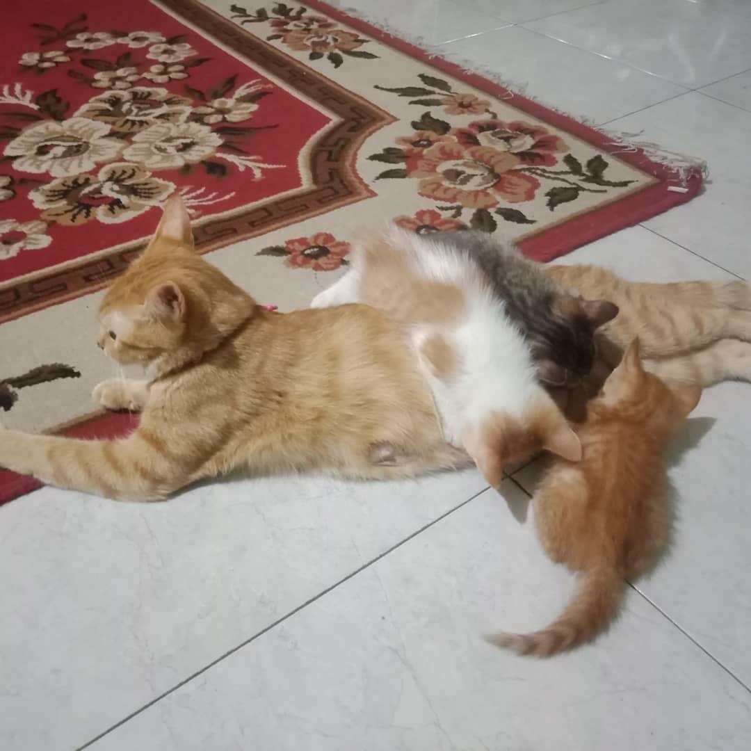 Understanding Changes In Behaviour In Cats Cat Day Cats I Love Cats