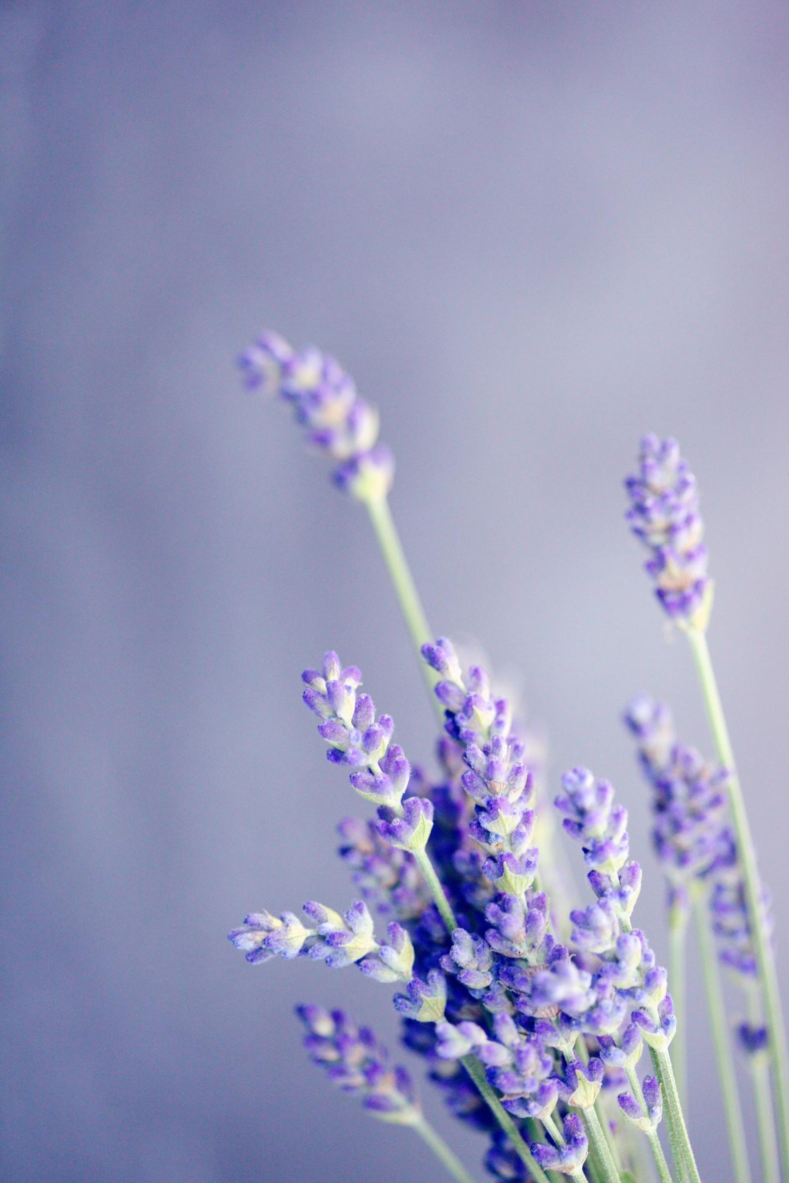 Organic Lavender Water Toner  Lavender Water Toner  Organic   Etsy