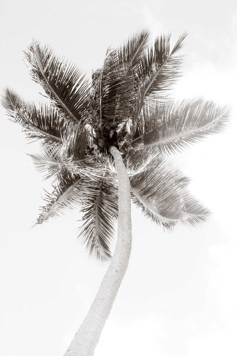 1 oversized black and white fine art photography print by cattie coyle photography