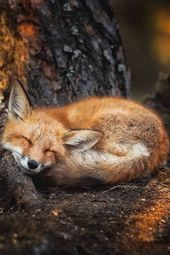 Interview Photographer Captures Enchantment of RealLife Fairy Forests in Finland