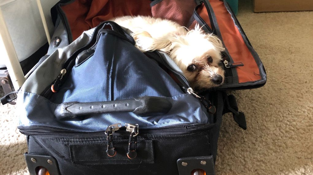 Travel Want to take your pet on the plane? Here are some