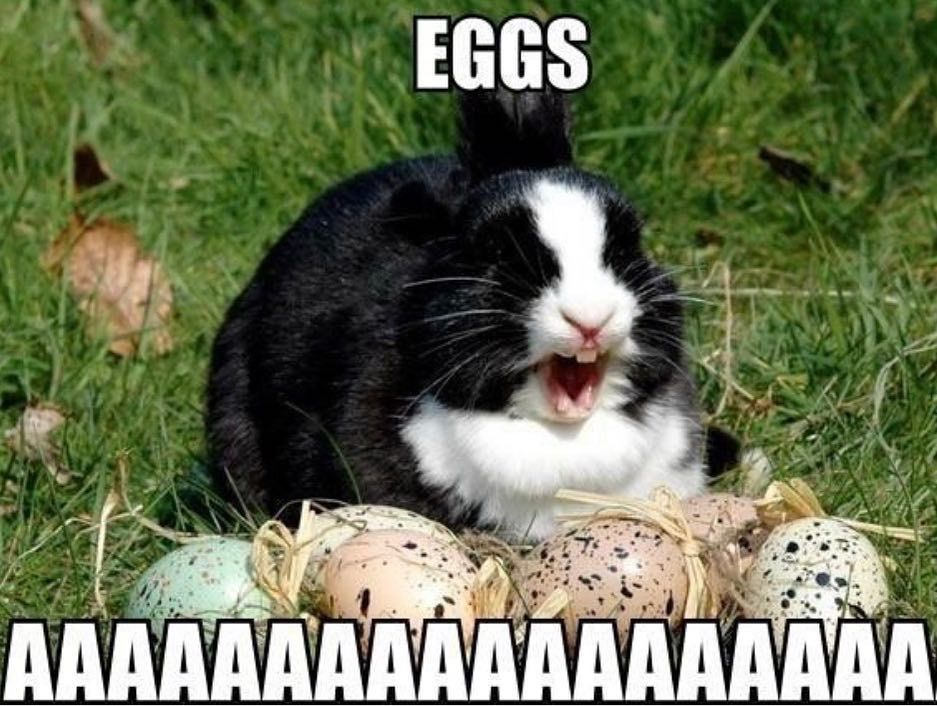 New The 10 Best Home Decor With Pictures Easter Weekend Opening Hours Good Friday 8am 5pm Easter Funny Easter Memes Funny Animal Memes Funny Animals