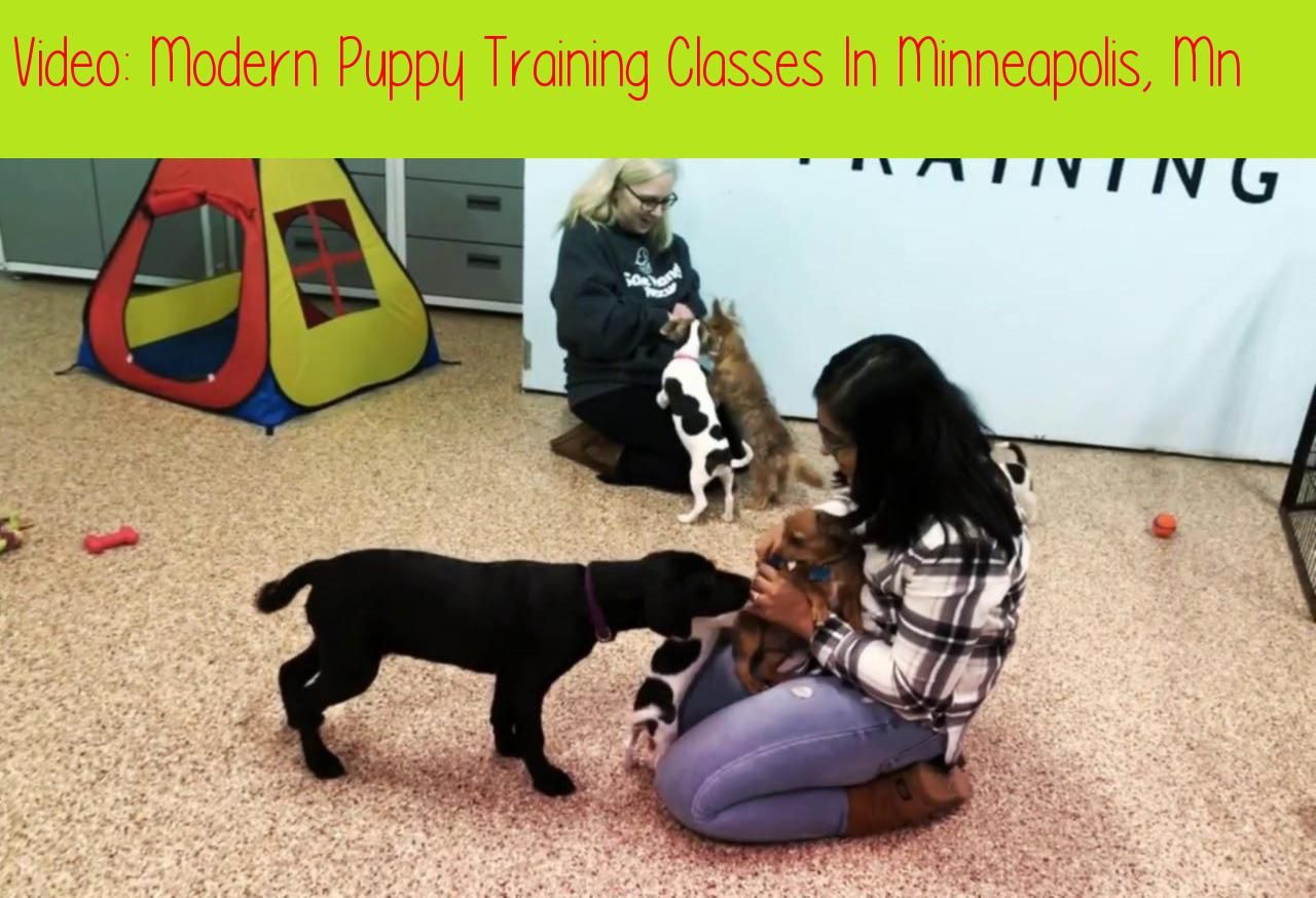 Modern Puppy Training Classes In Minneapolis Mn Go Anywhere