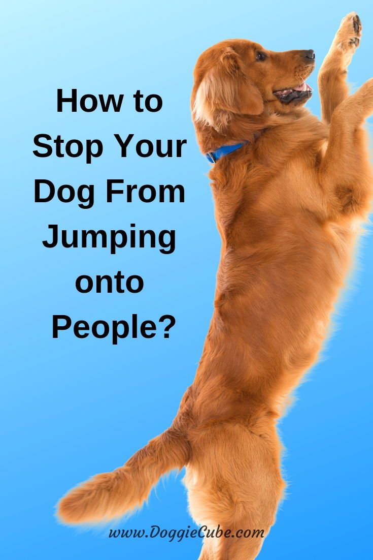 How to stop your dog from jumping onto people dog