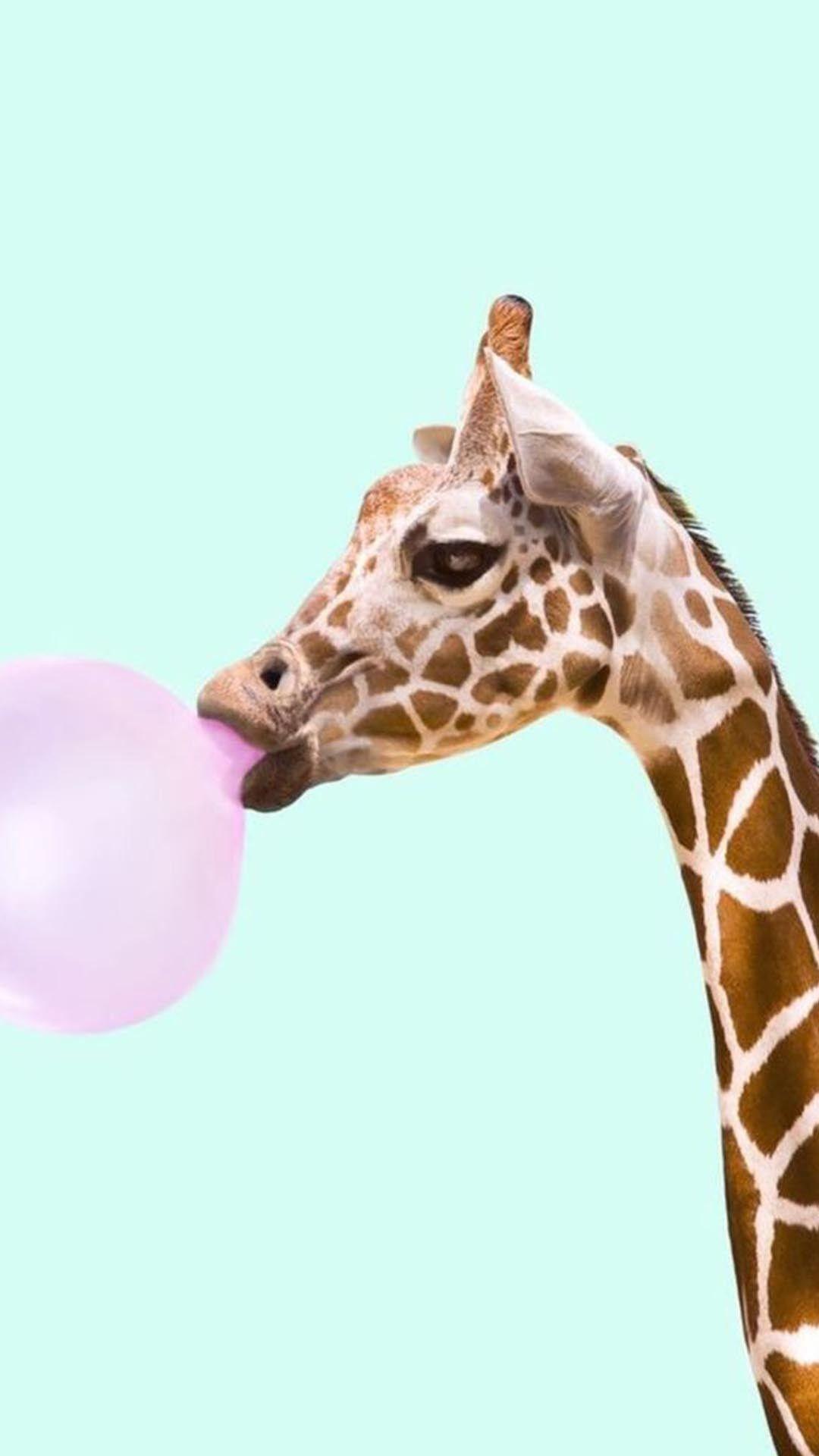 Giraffe Giraffidae Terrestrial Animal Neck Wildlife Snout Animal Wallpaper Iphone Wallpaper Glitter Iphone Wallpaper Hipster