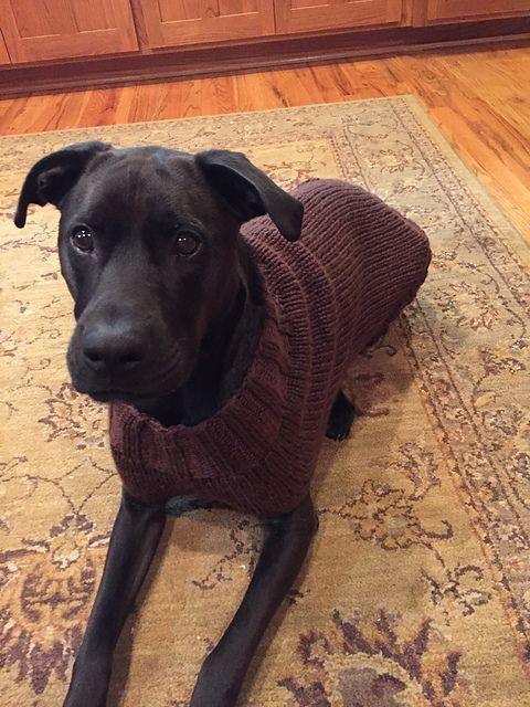 Ravelry sharid\u0027s Indy\u0027s Sweater