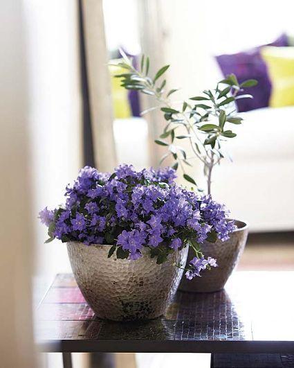 Plantas para decorar interiores indoor flowers and - Plantas para decorar interiores ...
