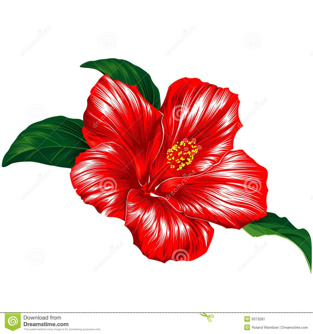 Red hibiscus flower stock image image 9373281 hello hibiscus hibiscus flowers izmirmasajfo Choice Image