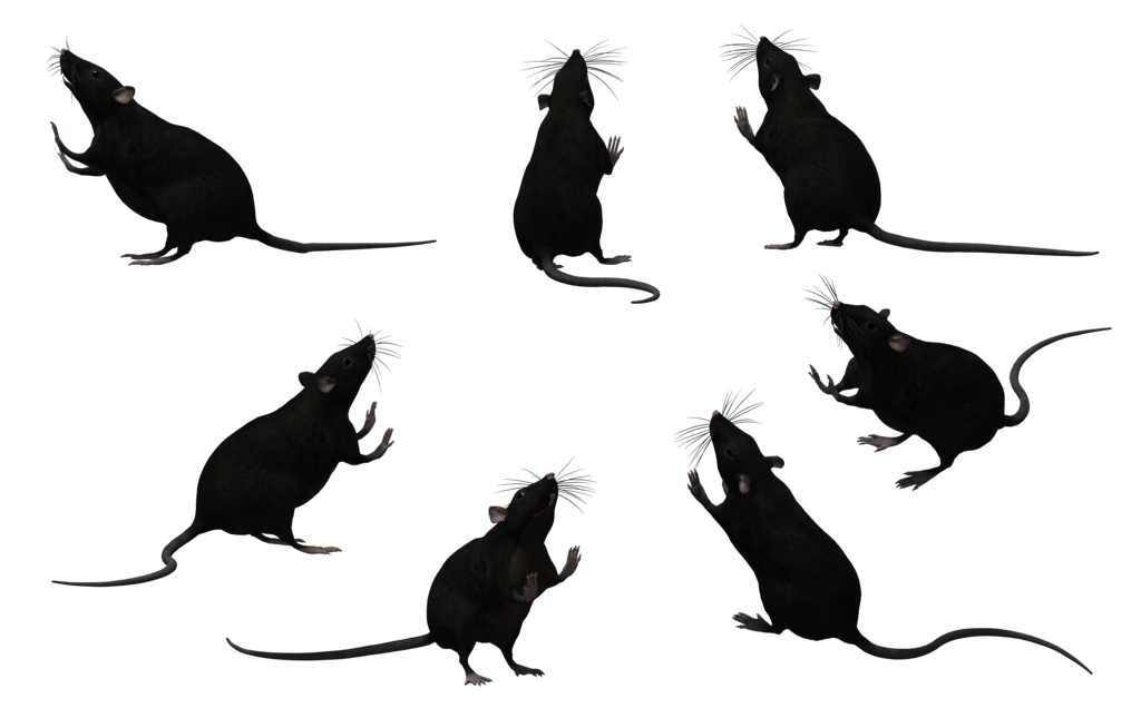 Rat Silhouettes Images Google Search Rat Silhouette Silhouette Images Photoshop Tutorial Manipulation