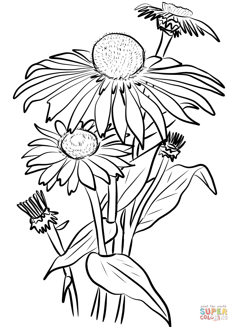 Daisies coloring page from Daisy category. Select from